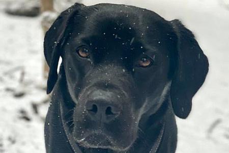 Wintergrüße von Pippa